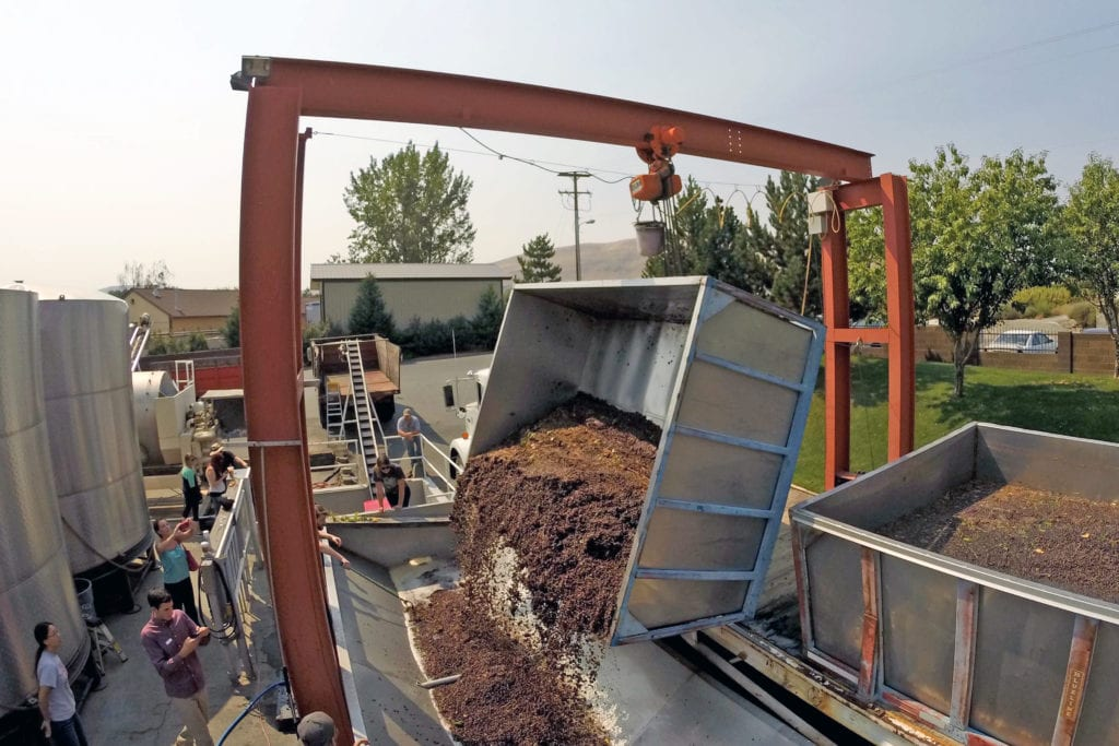 Sauvignon Blanc grapes arrive at the crush pad for Barnard Griffin winery in Richland. (Photo by Andy Perdue)