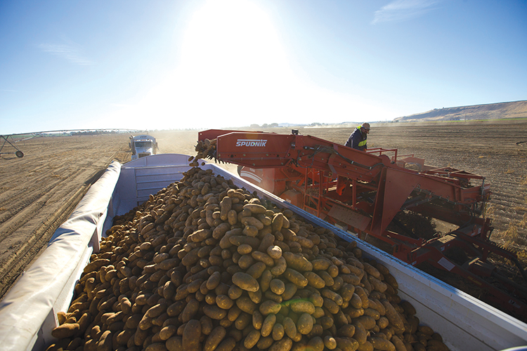 Photo courtesy Washington State Potato Commission.